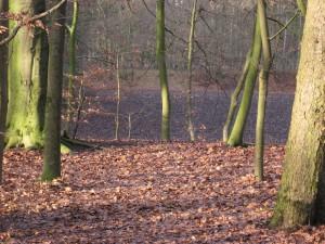Foto van een akkertje in het bos