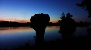 Knotwilgen aan het water bij avondlicht. Foto Loes.