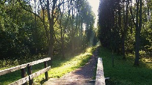 Pad van het bruggetje naar het bos