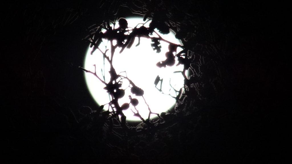 Volle maan schijnt door boomtakken. Foto Loes