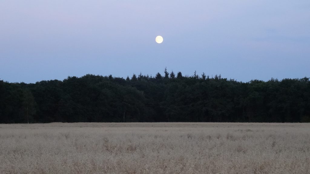 Volle maan boven bos en veld