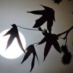 Volle maan van de Klif (Samhain)